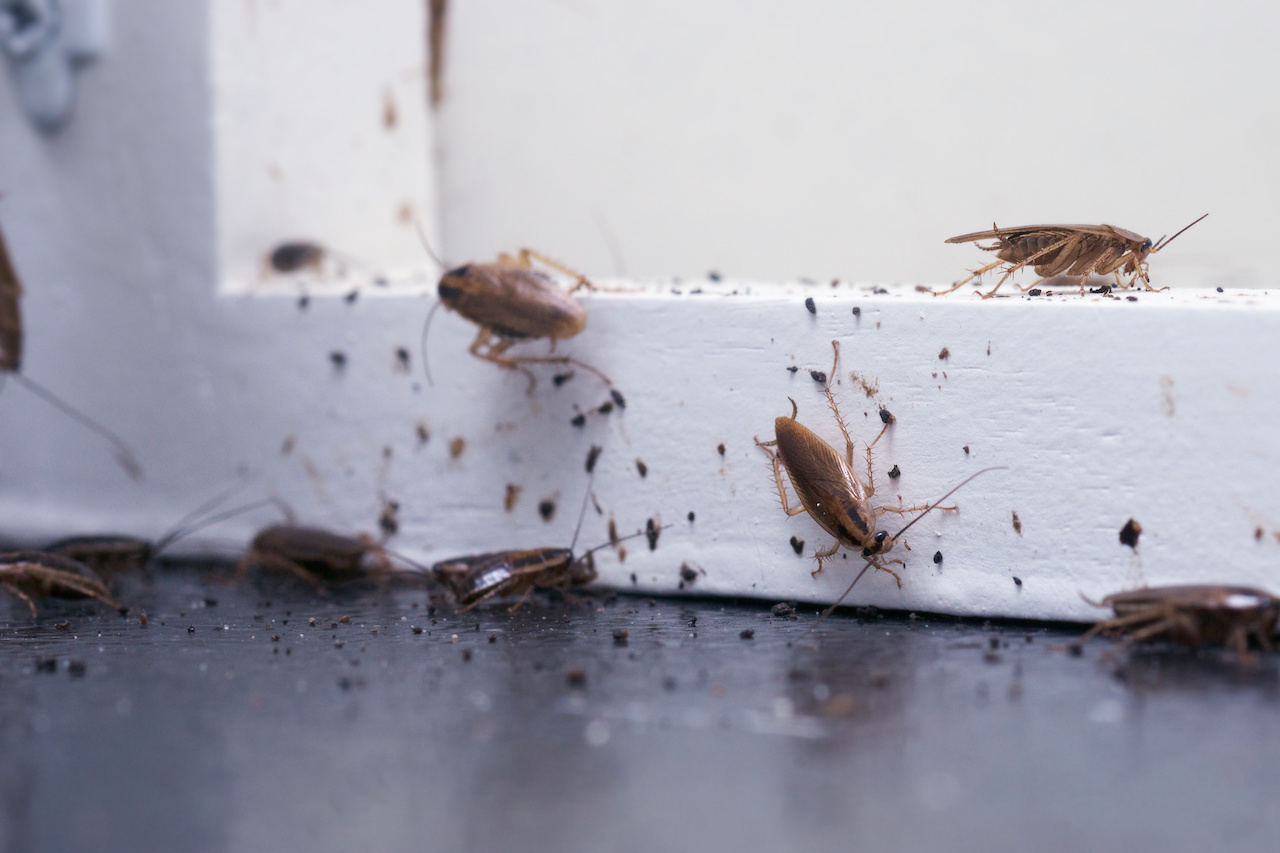 Roaches in Your Restaurant: Commercial Pest Control is Vital