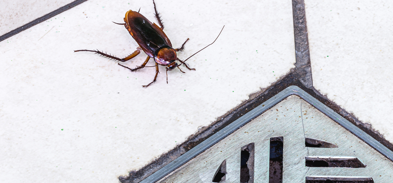 Home Repairs You Should Make to Prevent Pest Issues