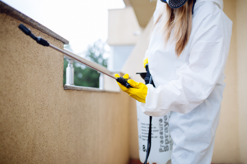 How to Recover Your Home After Termite Damage